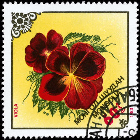 phytology: MONGOLIA - CIRCA 1983: A Stamp printed in MONGOLIA shows image of a Violets, from the series Local Flowers, circa 1983 Stock Photo