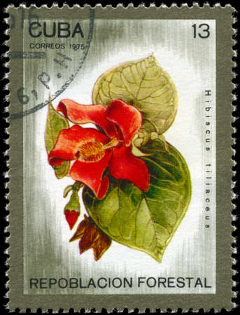 reforestation: CUBA - CIRCA 1975: A Stamp printed in CUBA shows image of a Hibiscus tiliaceus, from the series Reforestation, circa 1975 Stock Photo