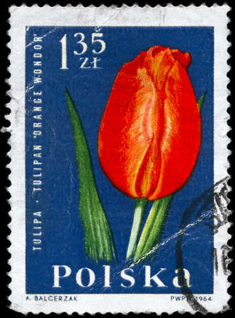 POLAND - CIRCA 1964: A Stamp printed in POLAND shows image of a Tulip Orange Wonder, from the series Garden Flowers, circa 1964 photo