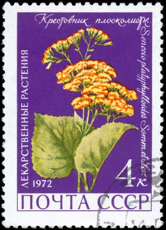 senecio: USSR - CIRCA 1972: A Stamp printed in USSR shows the Groundsel, with the description Senecio platyphylloides, from the series Medicinal Plants, circa 1972 Stock Photo