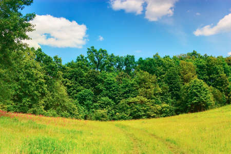 Landscape with a forest edge. HDR image photo