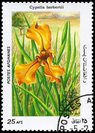 AFGHANISTAN - CIRCA 1985: A Stamp printed in AFGHANISTAN shows image of a Cypella herbertii, from the series Flowers, circa 1985 photo