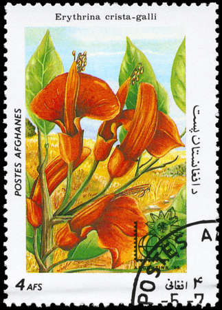 erythrina: AFGHANISTAN - CIRCA 1985: A Stamp printed in AFGHANISTAN shows image of a Erythrina crista-galli, from the series Flowers, circa 1985