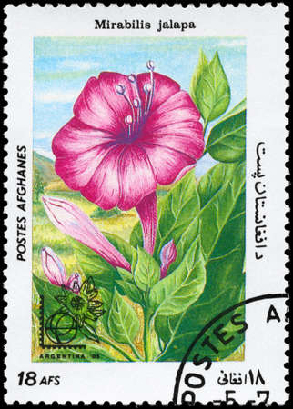 AFGHANISTAN - CIRCA 1985: A Stamp printed in AFGHANISTAN shows image of a Mirabilis jalapa, from the series Flowers, circa 1985 photo