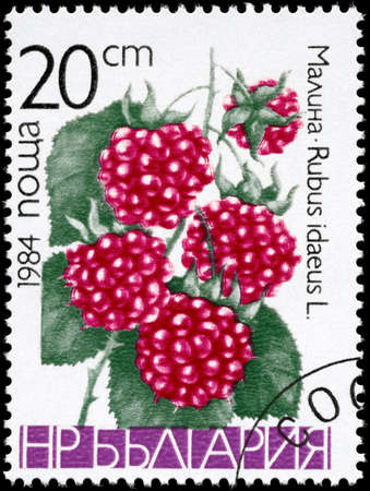 bacca: BULGARIA - CIRCA 1984: A Stamp printed in BULGARIA shows image of a Raspberries Rubus idaeus, from the series Berries, circa 1984