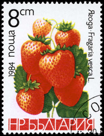fragaria: BULGARIA - CIRCA 1984: A Stamp printed in BULGARIA shows image of a Strawberries Fragaria vesca, from the series Berries, circa 1984