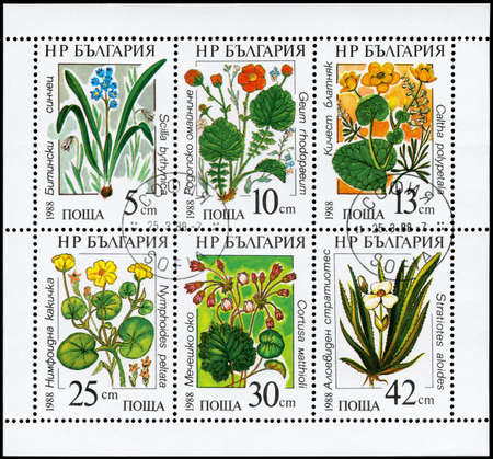 phytology: BULGARIA - CIRCA 1988: A Stamp sheet printed in BULGARIA shows set of the Flowers, from the series Marine flowers, circa 1988 Stock Photo
