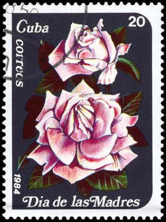phytology: CUBA - CIRCA 1984: A Stamp printed in CUBA shows image of a Pink roses, from the series Mothers Day, circa 1984 Stock Photo
