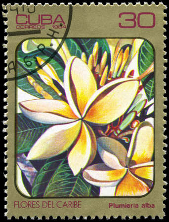 perforated stamp: CUBA - CIRCA 1984: A Stamp printed in CUBA shows image of a Plumieria alba, from the series Caribbean Flowers, circa 1984