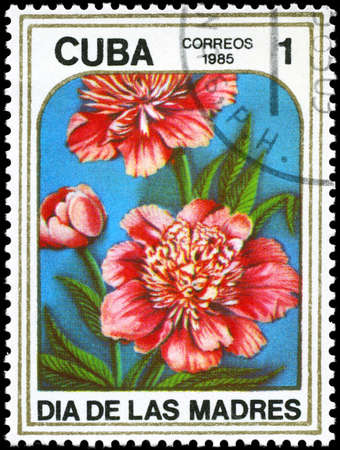 perforated stamp: CUBA - CIRCA 1985: A Stamp printed in CUBA shows image of a Peonies, from the series Mothers Day, circa 1985 Stock Photo
