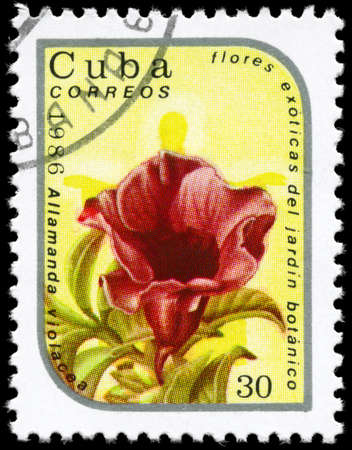 phytology: CUBA - CIRCA 1986: A Stamp printed in CUBA shows image of a Allamanda violacea, from the series Exotic flowers in the Botanical Gardens, circa 1986 Stock Photo