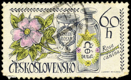 perforated stamp: CZECHOSLOVAKIA - CIRCA 1971: A Stamp printed in CZECHOSLOVAKIA shows image of a Dog Rose and Jars, from the series Local Flowers, circa 1971