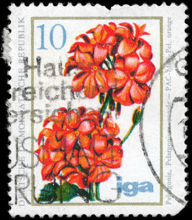 GDR - CIRCA 1975: A Stamp printed in GDR shows image of a Geranium, series, circa 1975 photo