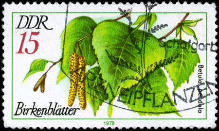 betula pendula: GDR - CIRCA 1978: A Stamp printed in GDR shows image of a Birch Betula pendula, from the series Medicinal Plants, circa 1978 Stock Photo