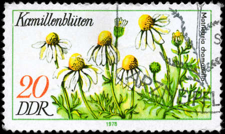 chamomilla: GDR - CIRCA 1978: A Stamp printed in GDR shows image of a Chamomile Matricaria chamomilla, from the series Medicinal Plants, circa 1978 Stock Photo