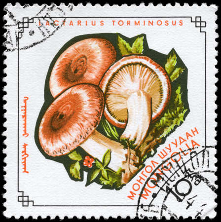 torminosus: MONGOLIA - circa 1964: A Stamp printed in MONGOLIA shows image of the Lactarius torminosus, from the series Mushrooms, circa 1964
