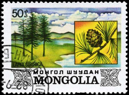 larix sibirica: MONGOLIA - CIRCA 1982: A Stamp printed in MONGOLIA shows the Siberian Larch, with the description Larix sibirica, series, circa 1982