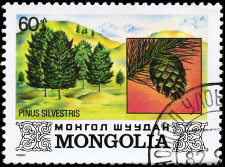 scots pine: MONGOLIA - CIRCA 1982: A Stamp printed in MONGOLIA shows the Scots Pine, with the description Pinus sylvestris, series, circa 1982 Stock Photo