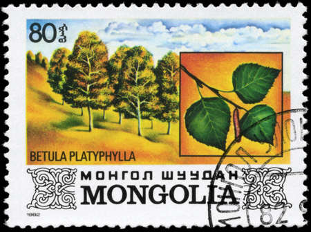 betula: MONGOLIA - CIRCA 1982: A Stamp printed in MONGOLIA shows the Japanese White Birch, with the description Betula platyphylla, series, circa 1982 Stock Photo