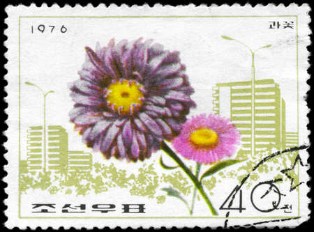 NORTH KOREA - CIRCA 1976: A Stamp printed in NORTH KOREA shows image of a China Aster, from the series Flowers, circa 1976 photo