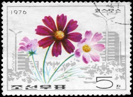cosmos flowers: NORTH KOREA - CIRCA 1976: A Stamp printed in NORTH KOREA shows image of a Cosmos, from the series Flowers, circa 1976
