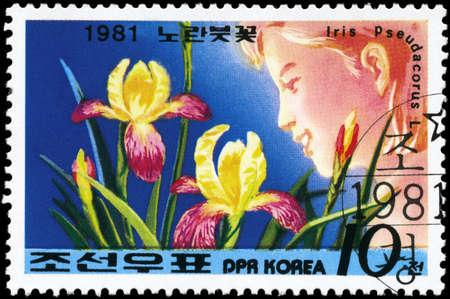 perforated stamp: NORTH KOREA - CIRCA 1981: A Stamp printed in NORTH KOREA shows image of a Iris Pseudacorus, from the series Designs, circa 1981 Stock Photo