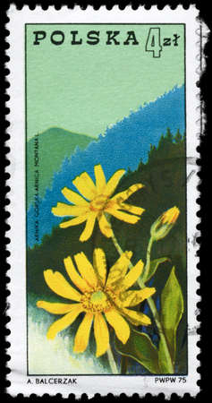 POLAND - CIRCA 1975: A Stamp printed in POLAND shows the Arnica and  Beskids Mountains, series, circa 1975 photo