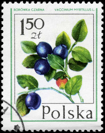 perforated stamp: POLAND - CIRCA 1977: A Stamp printed in POLAND shows image of a Bilberry Vaccinium myrtillus, from the series Forest Fruits, circa 1977