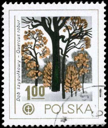 english oak: POLAND - CIRCA 1978: A Stamp printed in POLAND shows the Human Environment Emblem and English Oak, series, circa 1978
