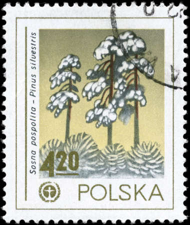 scots pine: POLAND - CIRCA 1978: A Stamp printed in POLAND shows the Human Environment Emblem and Scots Pine, series, circa 1978