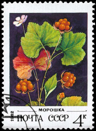 USSR - CIRCA 1982: A Stamp printed in USSR shows image of a Cloudberries, series, circa 1982 photo