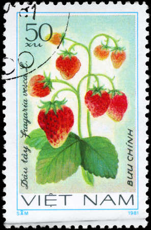 VIETNAM - CIRCA 1981: A Stamp printed in VIETNAM shows the  Strawberry Fragaria vesca, from the series Fruit, circa 1981  photo
