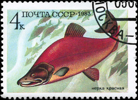fish exhibition: USSR - CIRCA 1983: A Stamp printed in USSR shows image of a Oncorhynchus Nerka, from the series Food Fish, circa 1983