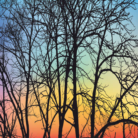 deciduous tree: Las ramas de los �rboles de invierno sobre fondo de cielo Vectores