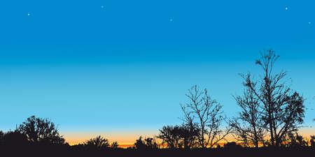 sundown: Winter Trees on a Sky background