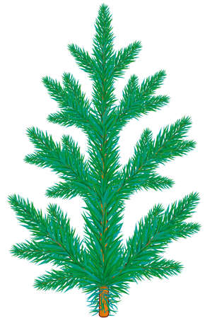 Blue spruce tree on white background Stock Vector - 13076227