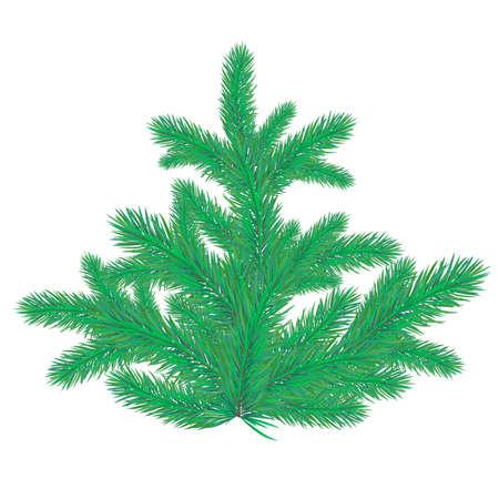 spruce tree: Spruce tree on white background