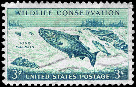 king salmon: USA - CIRCA 1956: A Stamp printed in USA shows the King Salmon, Wildlife Conservation issue, circa 1956