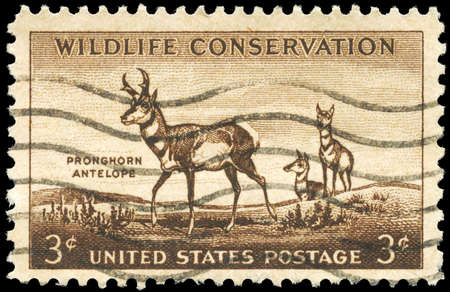 wildlife conservation: USA - CIRCA 1956: A Stamp printed in USA shows the Pronghorn Antelope, Wildlife Conservation issue, circa 1956 Stock Photo