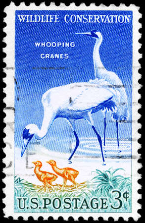 whooping: USA - CIRCA 1957: A Stamp printed in USA shows the Whooping Cranes, Wildlife Conservation issue, circa 1957