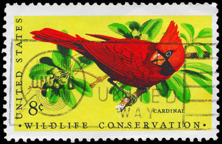 redbird: USA - CIRCA 1972: A Stamp printed in USA shows the Cardinal bird, Wildlife Conservation issue, circa 1972 Stock Photo