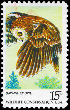 wildlife conservation: USA - CIRCA 1978: A Stamp printed in USA shows the Saw-whet Owl, Wildlife Conservation issue, circa 1978