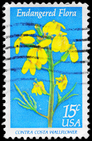 wallflower: USA - CIRCA 1979: A Stamp printed in USA shows the Contra Costa Wallflower, Endangered Flora issue, circa 1979