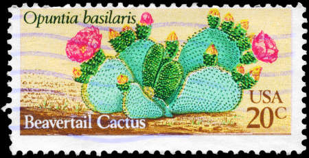 phytology: USA - CIRCA 1981: A Stamp printed in USA shows the Beavertail Cactus (Opuntia basilaris), Desert Plants series, circa 1981