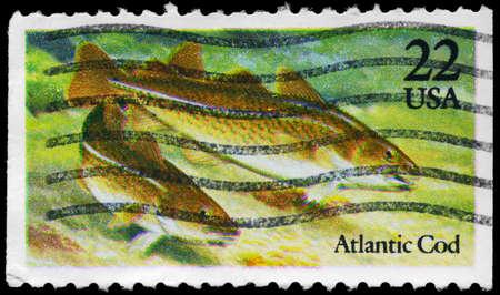 demersal: USA - CIRCA 1986: A Stamp printed in USA shows the Atlantic Cod, Fish series, circa 1986