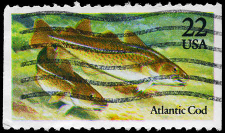 USA - CIRCA 1986: A Stamp printed in USA shows the Atlantic Cod, Fish series, circa 1986