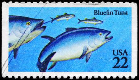demersal: USA - CIRCA 1986: A Stamp printed in USA shows the Bluefin Tuna, Fish series, circa 1986