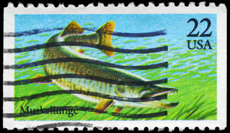 riverine: USA - CIRCA 1986: A Stamp printed in USA shows the Muskellunge, Fish series, circa 1986