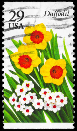 phytology: USA - CIRCA 1993: A Stamp printed in USA shows the Daffodil, Garden Flowers series, circa 1993