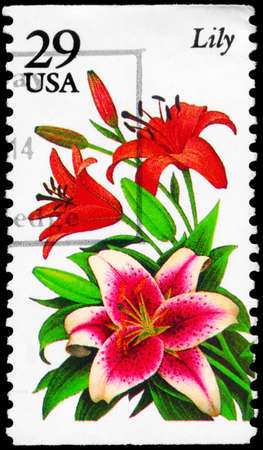 phytology: USA - CIRCA 1994: A Stamp printed in USA shows the Lily, Garden Flowers series, circa 1994